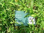 菊科植物:P2140616