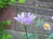菊科植物:P2110353