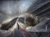 丁子蘭溪與虎豹潭北勢溪水中的魚、蝦、螺和鱉:DSC04362.JPG