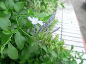 草本類植物:P2110037