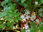 復旦三月花朵:DSC03067.JPG