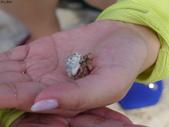 馬爾地夫-瑞僖敦渡假村的生物:L1010025綠殼寄居蟹.JPG