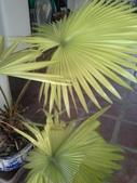 老友台北家盆栽植物:13806.jpg