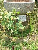 菊科植物:P2140788