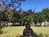 文化公園(原復旦公園)賞櫻花與小紅果:S__28041223.jpg