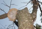 野菇蕈-復旦109~110年:DSC08076薄邊蜂窩菌.jpg