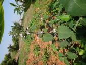 109年,復旦社區新的花草樹木:DSC03102.JPG