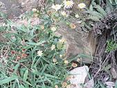 菊科植物:P2130803