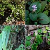 雙溪-老農夫生態農莊及虎豹潭的植物:相簿封面
