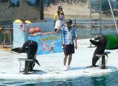 哺乳綱 (貂科、熊科、蝙蝠、松鼠、袋鼠、海豚、鯨魚、海獅):海獅敬禮.JPG