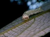 大雪山昆蟲與蜘蛛:DSC07853.JPG