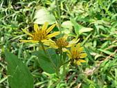 菊科植物:P2150986.JPG