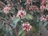 107~108年,復旦社區新的花草:DSC08006.JPG
