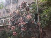 107~108年,復旦社區新的花草:DSC08009.JPG