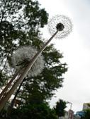 菊科植物:P1940923