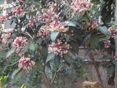 107~108年,復旦社區新的花草:DSC08010.JPG