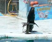 哺乳綱 (貂科、熊科、蝙蝠、松鼠、袋鼠、海豚、鯨魚、海獅):海獅
