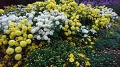 菊科植物:13121.jpg