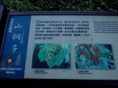 東勢大雪山半日賞鳥:IMG_8652鳥類的餐廳.JPG