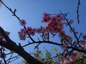 文化公園(原復旦公園)賞櫻花與小紅果:DSC01790.JPG