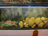 龜吼漁港-珍如意餐廳:DSC08649.JPG