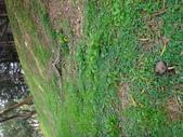 野菇蕈-復旦109~110年:DSC09575.JPG