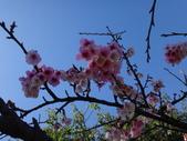 文化公園(原復旦公園)賞櫻花與小紅果:DSC01791.JPG