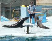 哺乳綱 (貂科、熊科、蝙蝠、松鼠、袋鼠、海豚、鯨魚、海獅):P2150737a.JPG