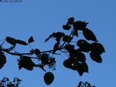 大雪山植物花草:IMG_8685.JPG