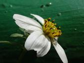 復旦三月花朵:DSC03028.JPG