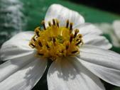 復旦三月花朵:DSC03030.JPG