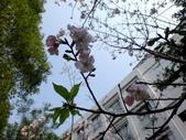 復旦三月花朵:DSC02725.JPG