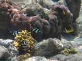馬爾地夫-印度洋的淺海生物:P7120452a.jpg