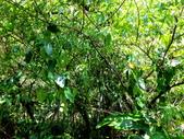 雙溪-老農夫生態農莊及虎豹潭的植物:DSC03548.JPG