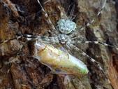 復旦的蜘蛛:DSC02917.JPG