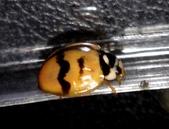 復旦-新天母公園的昆蟲107/1:DSC00079.JPG