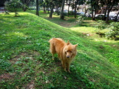 愛犬再次失蹤一天一夜:DSC00036.JPG