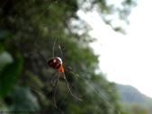 雙溪丁蘭谷生態園區的蜘蛛:DSC03884.JPG