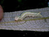 大雪山昆蟲與蜘蛛:DSC07855.JPG