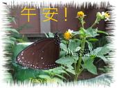 昆蟲問安卡-午安:午安!小紫斑蝶.jpg
