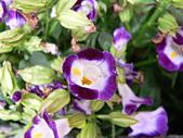 草本類植物:P2070479.JPG