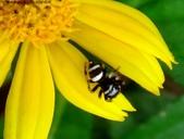 雙溪丁蘭谷生態園區的蜘蛛:DSC03904a.jpg