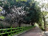 復旦三月花朵:DSC02758.JPG