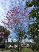 文化公園(原復旦公園)賞櫻花與小紅果:S__28041217復旦公園.jpg
