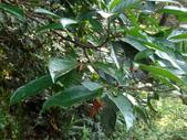 雙溪-老農夫生態農莊及虎豹潭的昆蟲:DSC04158.JPG