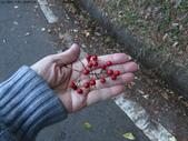 大雪山植物花草:IMG_8649.JPG