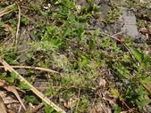 雙溪-老農夫生態農莊及虎豹潭的植物:DSC03552.JPG
