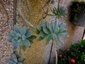 復旦社區園藝花種:DSC03203.JPG