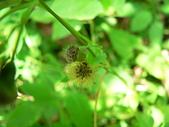 菊科植物:P2160263
