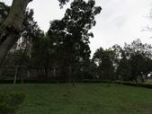 新天母公園侯鳥-樹鷚:IMG_9479新天母公園.JPG